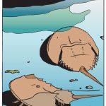 Horseshoe crab digital art by Leslie Evans Illustration