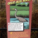 Great blue heron digital art by Leslie Evans Illustration