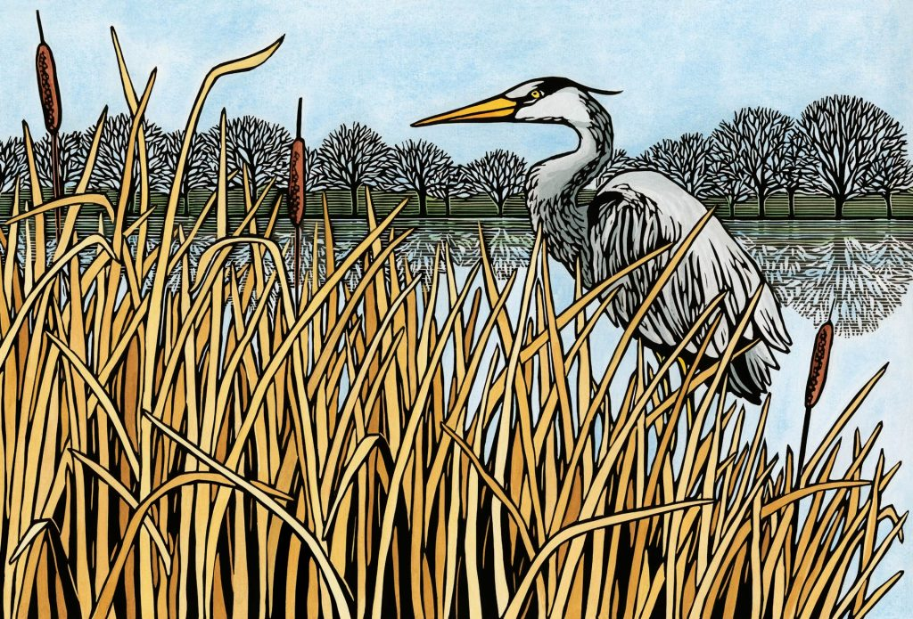 River heron linocut by illustrator Leslie Evans