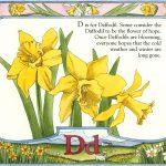 daffodil art by Leslie Evans Illustration
