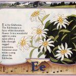 edelweiss art by Leslie Evans Illustration