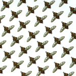 Flies from Hey There, Stink Bug! by Leslie Evans Illustration