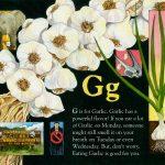 Garlic art by Leslie Evans Illustration