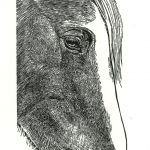 Horse wood engraving by Leslie Evans, Sea Dog Press