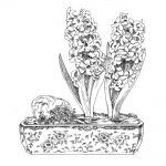 Hyacinths pen & ink art by Leslie Evans Illustration