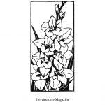 Gladiolus linocut by Leslie Evans Illustration