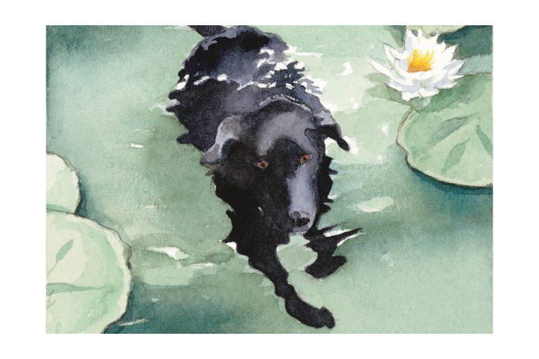 Morgan swimming watercolor by Leslie Evans Illustration