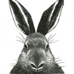 rabbit wood engraving by Leslie Evans, Sea Dog Press