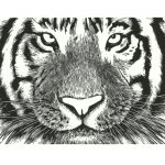 Tiger wood engraving by Leslie Evans
