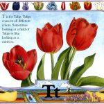 tulip art by Leslie Evans Illustration