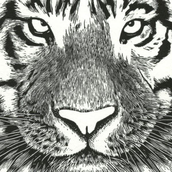 tiger wood engraving by Leslie Evans