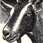Stubborn Stout wood engraving by Leslie Evans, Sea Dog Press